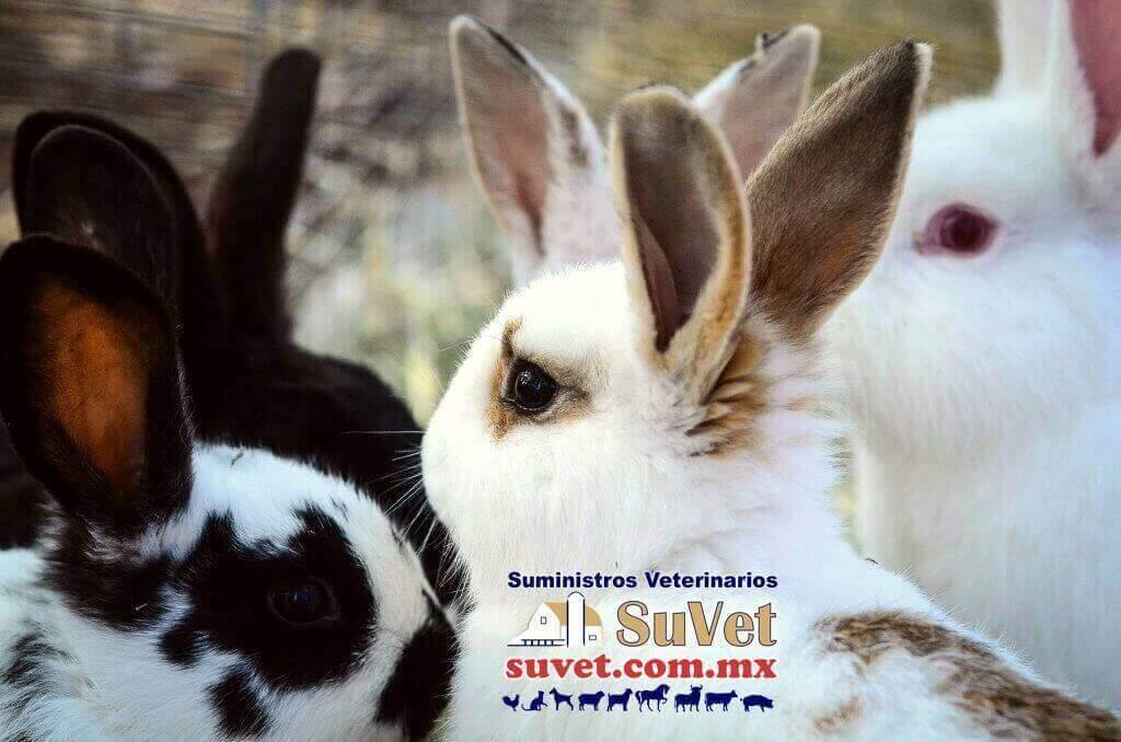 produccion-sustentable-de-conejos